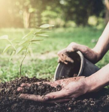 Mamaearth's plant goodness initiative - point2note